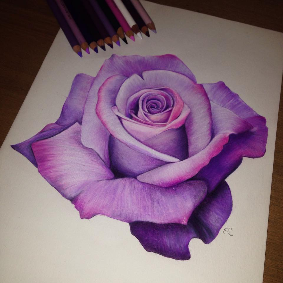 Shannon camden brisbane qld art Teach me how to draw a flower